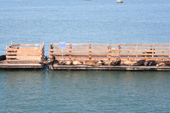 Avila Beach, CA: Adorable sea lions