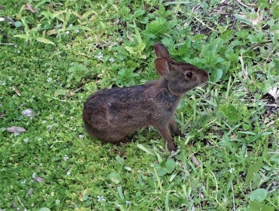 Sun Viking Lodge: Bunny spotting!