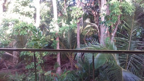At the Mango Tree Holiday Apartments: View from the back balcony of townhouse