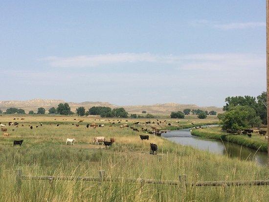 Buffalo, WY: photo1.jpg