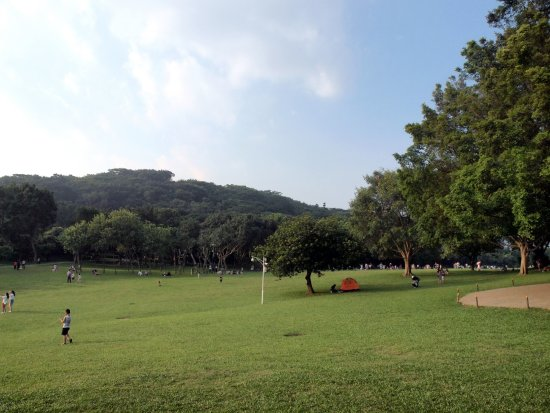 Shenzhen Lianhuashan Park: 場地和草地