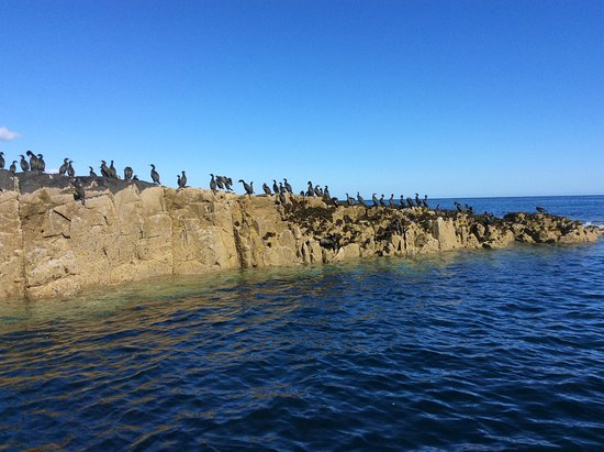 Seahouses, UK: Shags