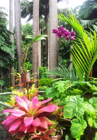 Hunte's Gardens: Just one of many lovely photos