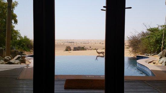 Al Maha, A Luxury Collection Desert Resort & Spa: IMG_20170813_095642_large.jpg