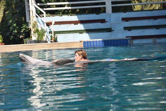 Дельфинарий Кемер: лучшие советы перед посещением ...