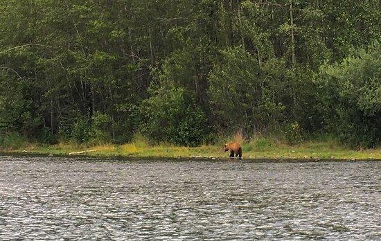 Alaska River Adventures - Day Tours: photo0.jpg