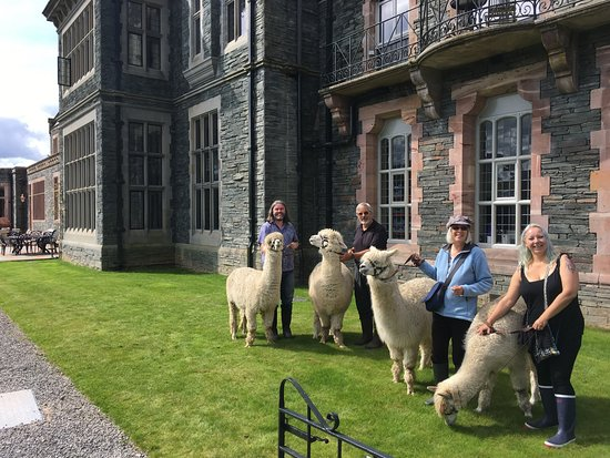 Cockermouth, UK: With the Alpacas outside Lingholme House