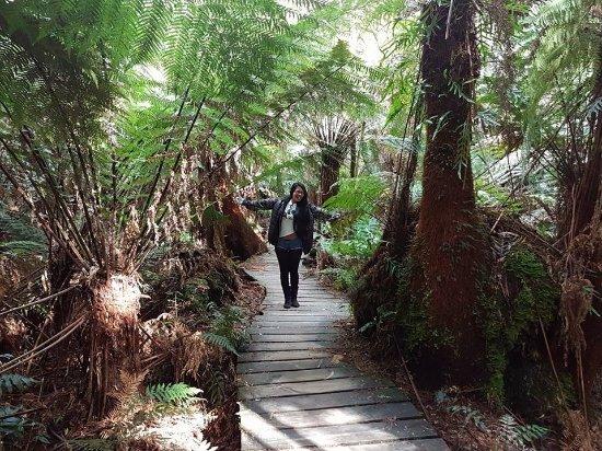 Apollo Bay, Austrália: Beautiful fern covered walk