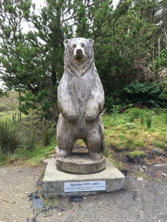 Hercules the Bear