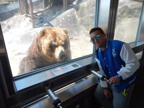 Noboribetsu, Giappone: Feeding the bears through the tube