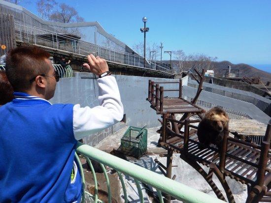 Noboribetsu, Giappone: Feeding the bears by throwing