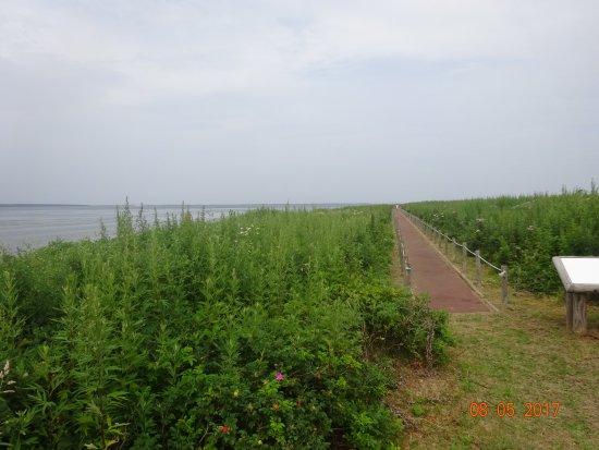 Cape Kimuaneppu照片