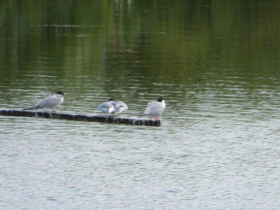 RSPB Saltholme: The main lake