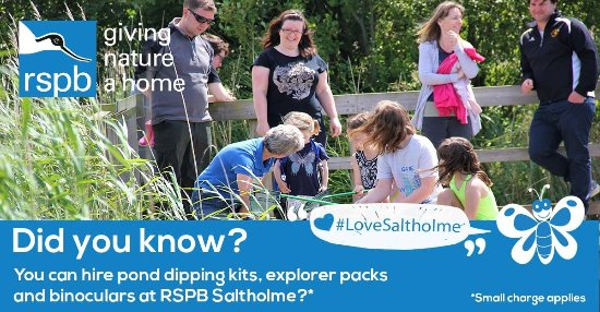 RSPB Saltholme: The cover picture