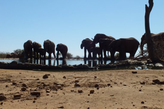 Madikwe Game Reserve, Sudáfrica: a view of the watering hole inside The Bush House grounds