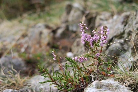 County Waterford, Ireland: Mooie natuur