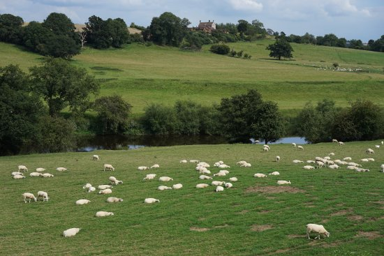 Kidderminster, UK: I counted all these sheep and still did not fall asleep such a pretty trip
