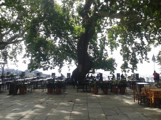 Makrinitsa, Grécia: Cool shade and view over the city of Volos
