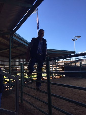 Roma, Australien: Dummy auction this guy talks fast
