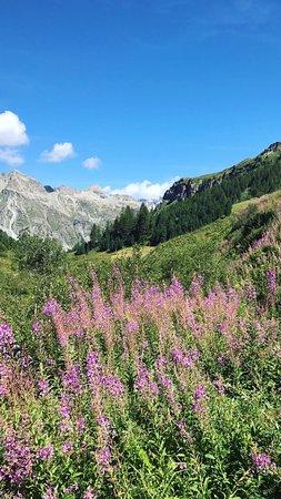 Sils im Engadin, Zwitserland: photo6.jpg