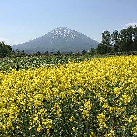 Kutchan-cho, Giappone: 三島さんの芝桜庭園