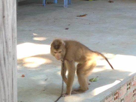 Koh Tonsay, كامبوديا: IMG_20170814_153612_large.jpg