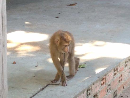 Koh Tonsay, كامبوديا: IMG_20170814_153613_large.jpg
