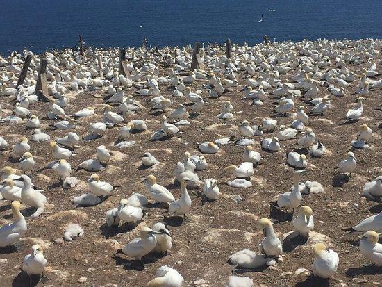 Perce, Canadá: Parc national de l'Île-Bonaventure-et-du-Rocher-Percé