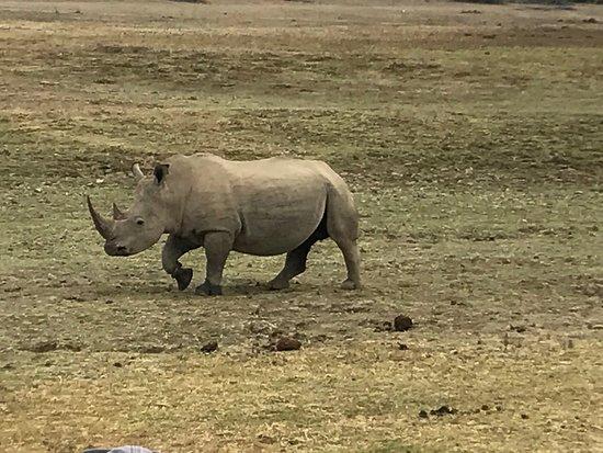 Kwandwe Private Game Reserve, Sudáfrica: photo2.jpg