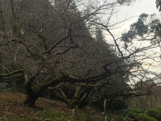 National Rhododendron Gardens: photo1.jpg