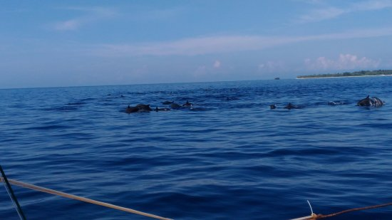 Baclayon, Filipinler: More photos of the spinner dolphin