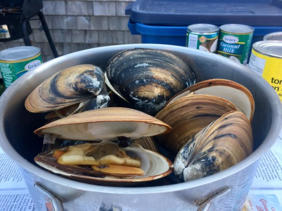 Victoria, Canada: The pot of cooked clams