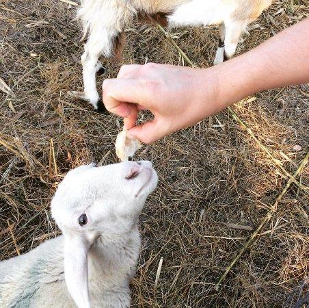 Piccola fattoria billede af agriturismo i tigli ghedi for Piccola fattoria moderna
