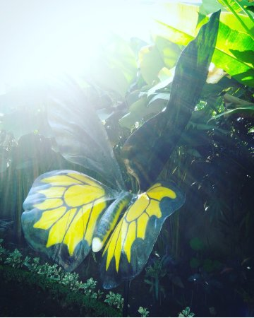 Lovina Beach, Indonesia: Butterfly park Ubud