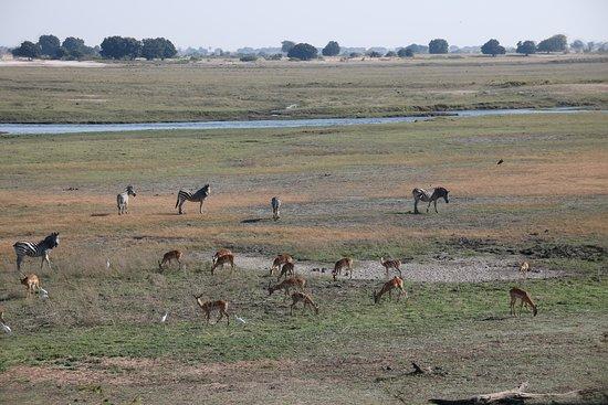 Kasane, Botswana: The plains in Chobe