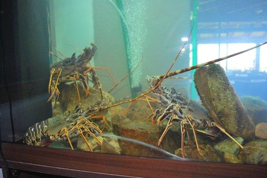 Parmi nos sp cialit s un vivier langouste des poissons for Vivier a poisson