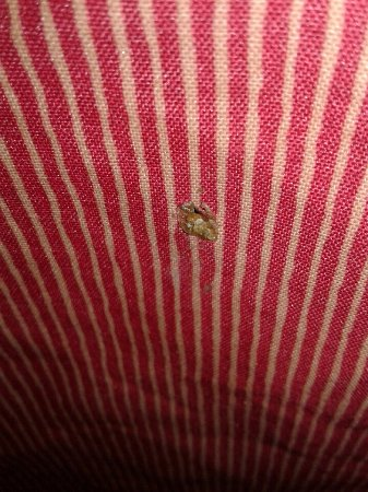 Independence, OH: Gross strain on Bed Skirt.