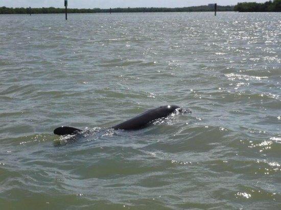 Dreamlander Tours: Curious dolphin