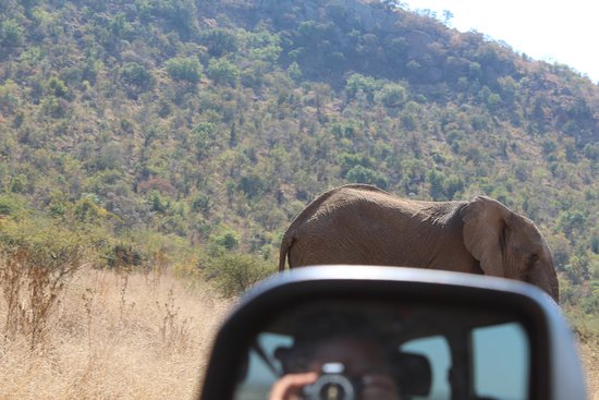 Sandton, South Africa: Pillanesburg Day Safari