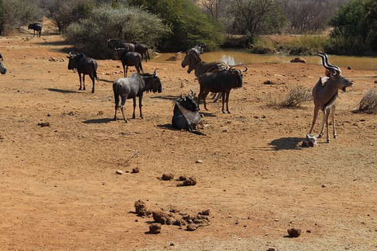 แซนตัน, แอฟริกาใต้: Kruger National Park
