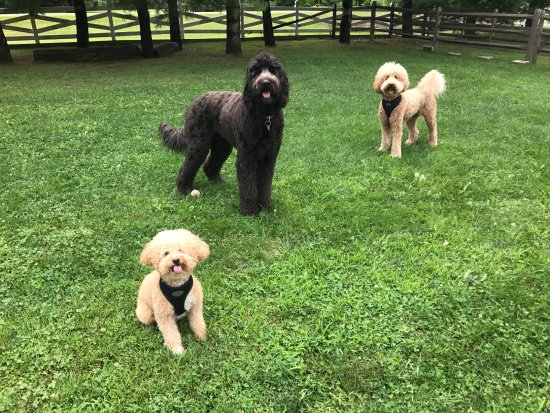 Mount Tremper, NY: Emerson Dog Park