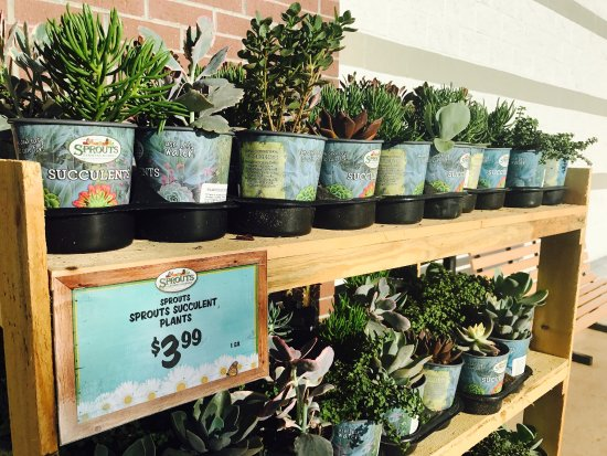 Palm Harbor, FL: Sprouts Farmers Market