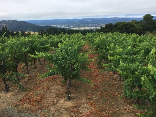 Healdsburg, Californië: Vineyard with a view of gorgeous the Alexander Valley and Sonoma County Coast!