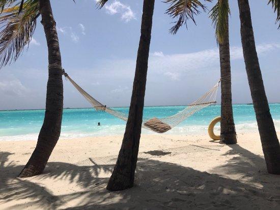 Gili Lankanfushi Maldives: Beautiful hammock at the beach 😎