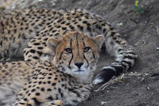 Hoedspruit, South Africa: FB_IMG_1502737949488_large.jpg