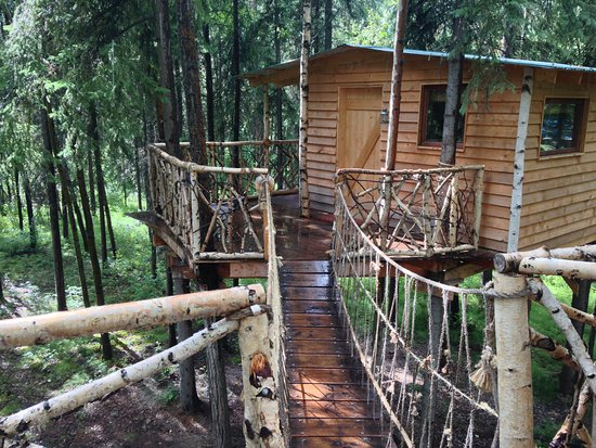 Sven's Basecamp Hostel: Tree House: suspension bridge and porch
