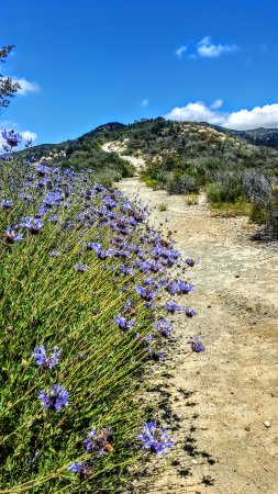 Jamul, Kalifornien: Wildflowers along the trail