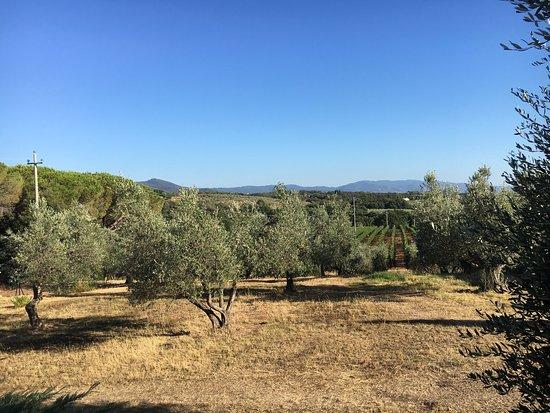 Villa Caprareccia Bibbona Via Bolgherese