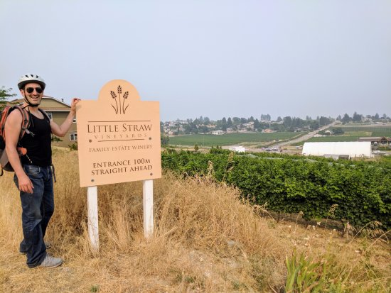Little Straw Vineyards: Just arrived