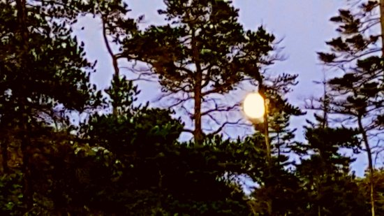 Winter Harbor, ME: Full moon rising at Schoodic Campground